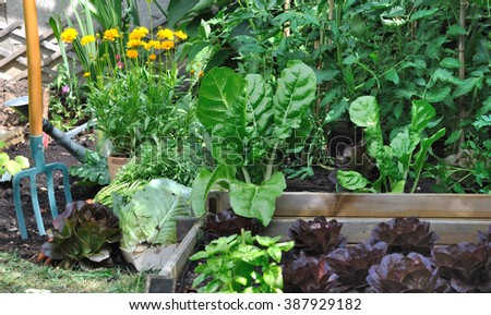 greenery vegetable garden with a spade  - stock photo