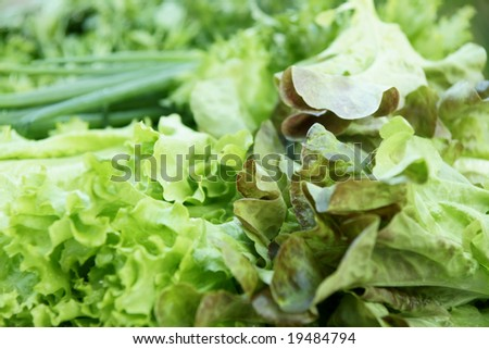 greengrocery assortment with  salad leaves, parsley, spring onions - stock photo