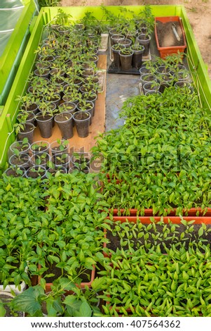 Greenhouse for growing seedlings - selective focus, copy space
