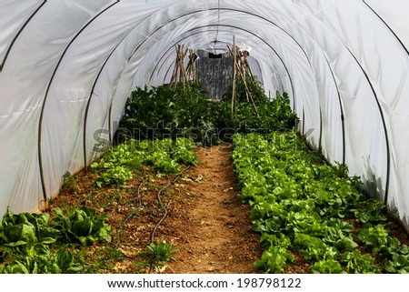 Greenhouse garden with vegetables