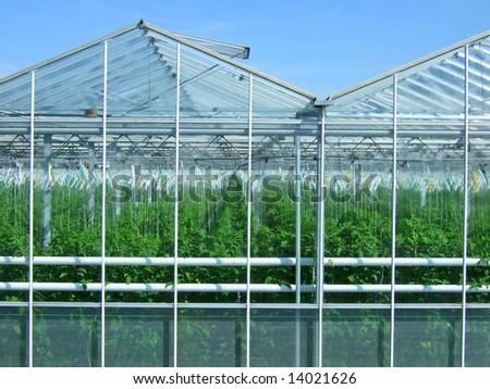 greenhouse in the Netherlands - stock photo