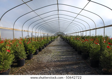 Greenhouse nursery. - stock photo