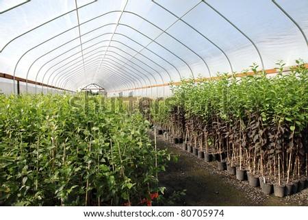 Greenhouse nursery in rural Oregon state. - stock photo