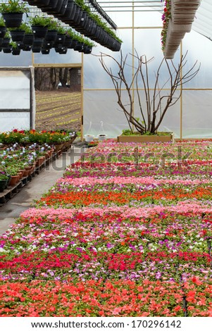 Greenhouse nursery with a variety of colorful flowers plants and hanging baskets.
