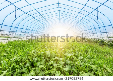 greenhouse?vegetable growth, shanghai china. - stock photo