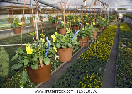 Greenhouse with plants and drip irrigation (drop by drop) - stock photo