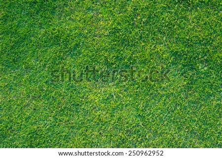 greensward football field background Green field - stock photo