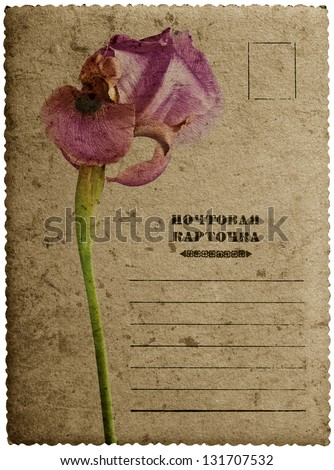 Greeting card with iris flower - stock photo