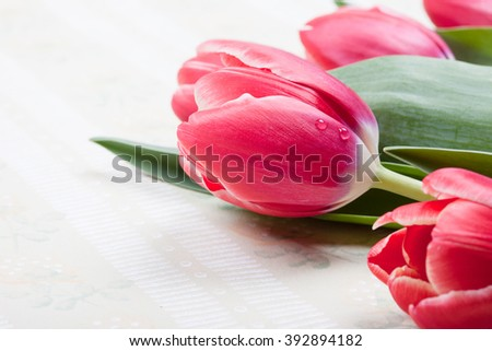 greeting card with red tulips closeup and space for text - stock photo