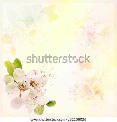 Greeting floral card with blossom cherry on  hazy background in pastel colors - stock photo