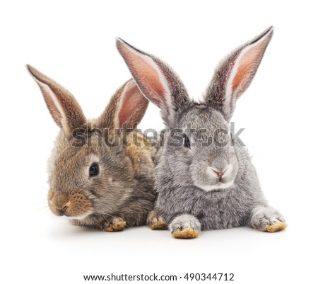 Grey and brown baby rabbits on a white background.