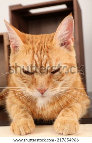 Grey and red cats on floor on wooden box background
