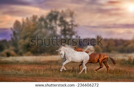 Grey and red stallions on sunset landscape background - stock photo