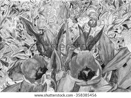 Grey Bouquet of tulips picture in a frame Pencil