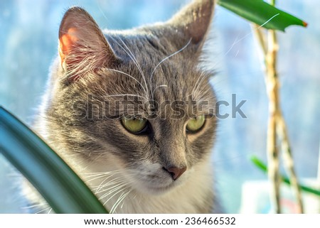 grey cat green eyes - stock photo