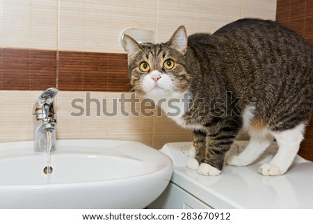 Grey cat interest water from the faucet in the sink - stock photo