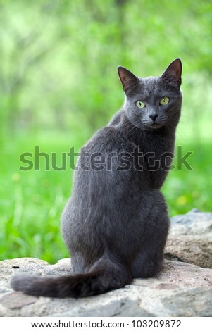 grey cat is enjoying nature - stock photo