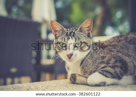 Grey cat lying on wall
