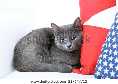 Grey cat on sofa closeup - stock photo