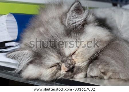 grey cat sleeping
