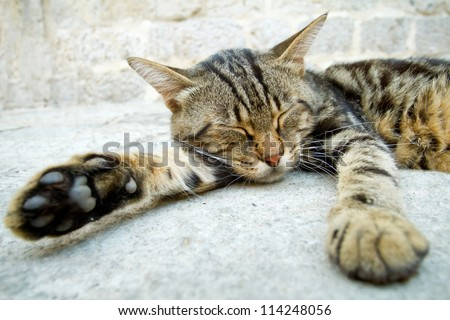Grey cat sleeping in the street - stock photo