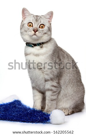Grey cat with biue new year hat - stock photo