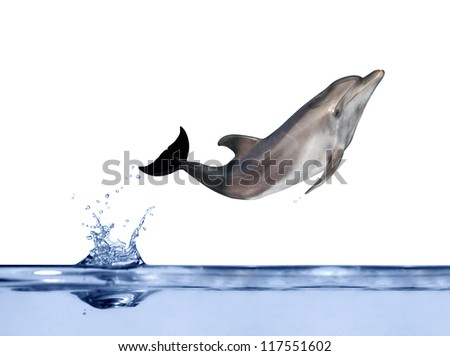 grey dolphin jumping above blue water - stock photo