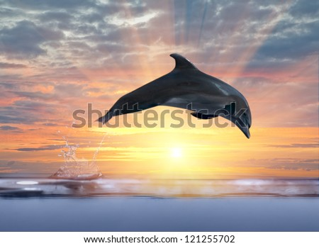 grey dolphin jumping above sunset sea - stock photo