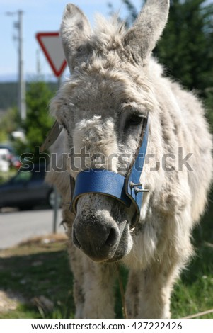 grey donkey - stock photo