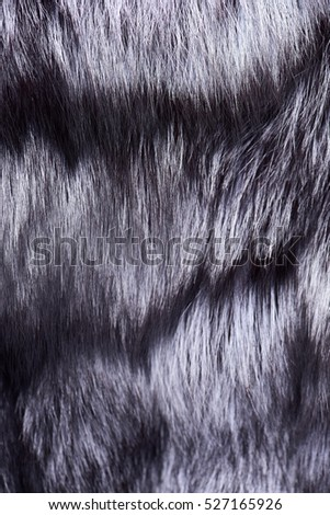 grey fur of silver fox textured background