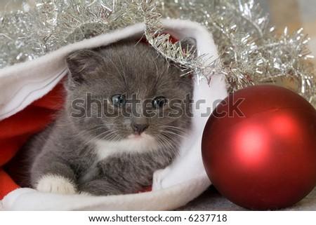 grey kitten and christmas decoration - stock photo
