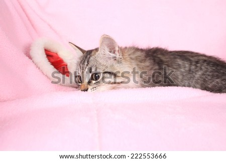 grey kitten and new year hubcap on a pink background   - stock photo