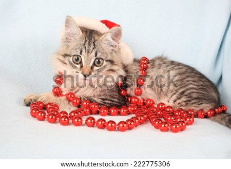 grey kitten in a new-year hubcap and with beads  - stock photo