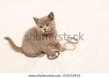 Grey kitten on pink background  - stock photo