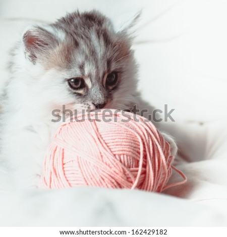 Grey kitten on the white cushion with a pink a ball of yarn - stock photo