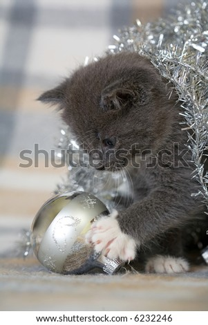 grey kitten playing with christmas decoration