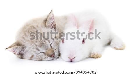 Grey kitten playing with white rabbit on white background. - stock photo