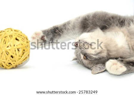 Grey kitten playing with yellow ball - stock photo