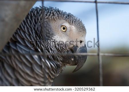 Grey Macaw - stock photo