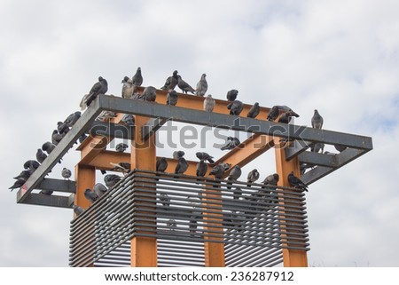 grey pigeons constituting the bird clade Columbidae sit on the gutter of an iron roofed suburban house on a sunny afternoon in early autumn. - stock photo