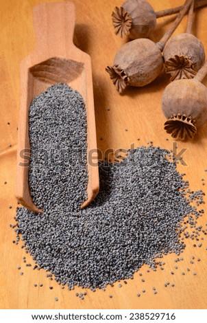 grey poppy seeds on wooden shovel - stock photo