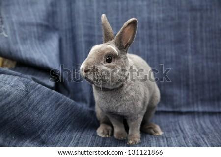 grey rabbit - stock photo