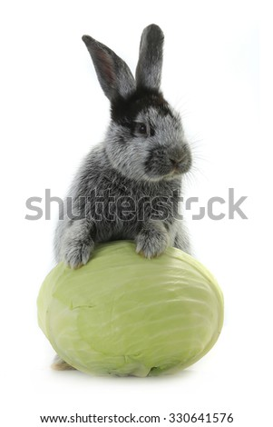 grey rabbit with cabbage on a white background - stock photo