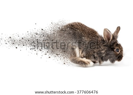 Grey running rabbit isolated on a white background - stock photo