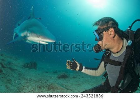 Grey shark ready to attack a scuba diver - stock photo