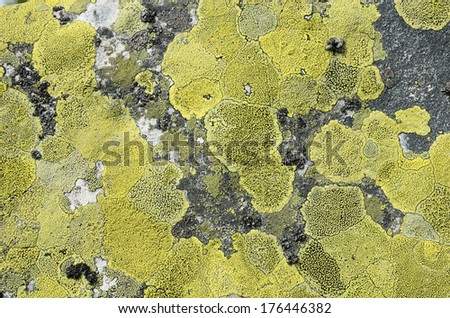 Grey stony surface is overgrown with greenish lichen. - stock photo
