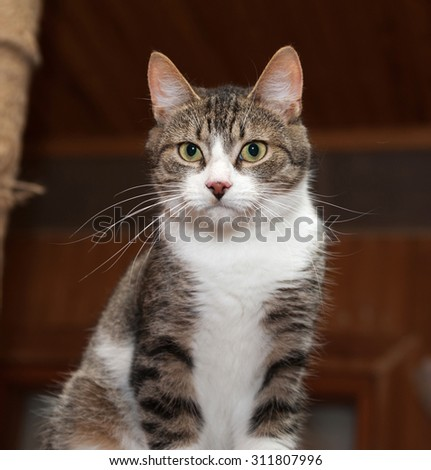 Grey tabby cat and kittens to sit on scratching post - stock photo