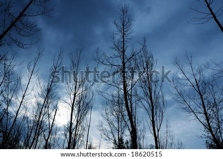 grey tree in cloudy day - stock photo