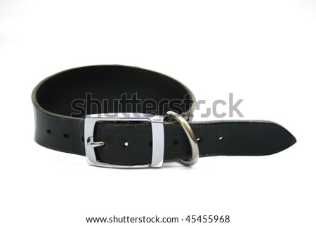 Greyhound dog collar.