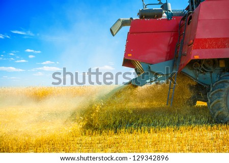 grinding of wheat at harvest - stock photo